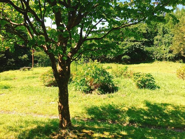 ふくおか家族旅行村キャンプ場 (8)