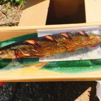 秋キャンプでご飯を炊いて秋刀魚と一緒に食べまくるデイキャンプ!明太子と豚汁、富山の黒作りもめっちゃ美味かった