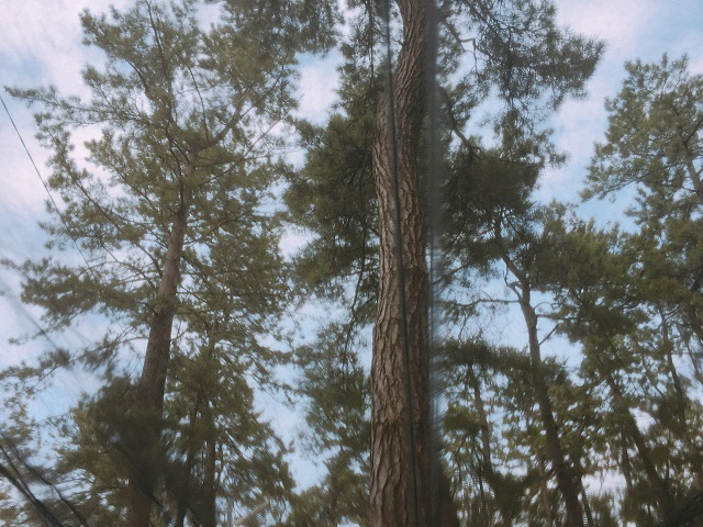 園家山キャンプ場でソロキャンプ (10)