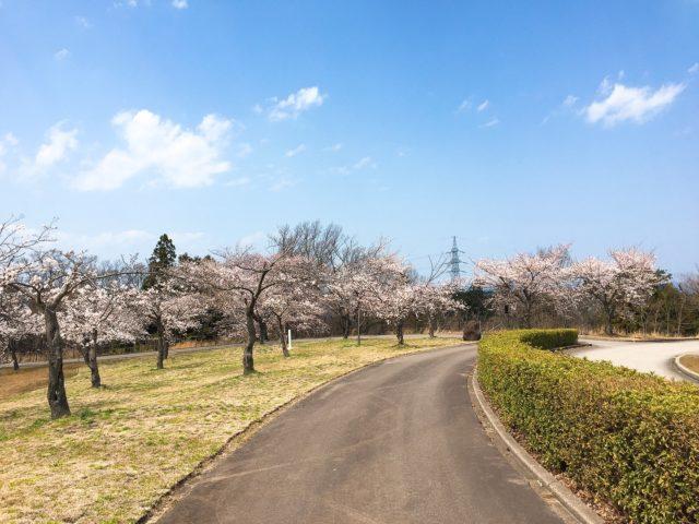 天気のいい桜並木1