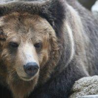 キャンプの熊対策、遭遇しない為に必要な準備と熊除けグッズ!