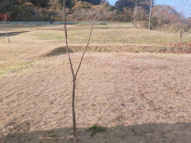 木の枝ランタンポール (1)