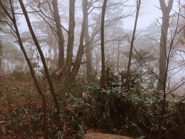 DDタープで雨キャンプ (31)