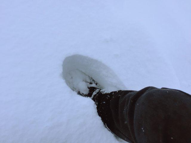 降りしきった雪