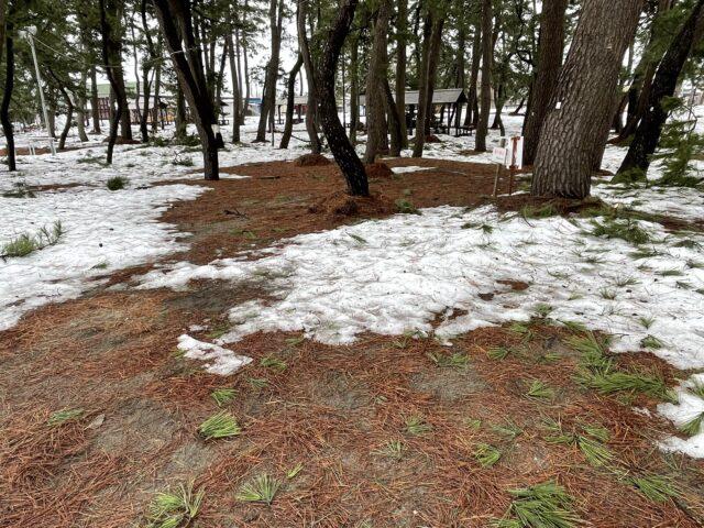 初の雪中キャンプ (26)