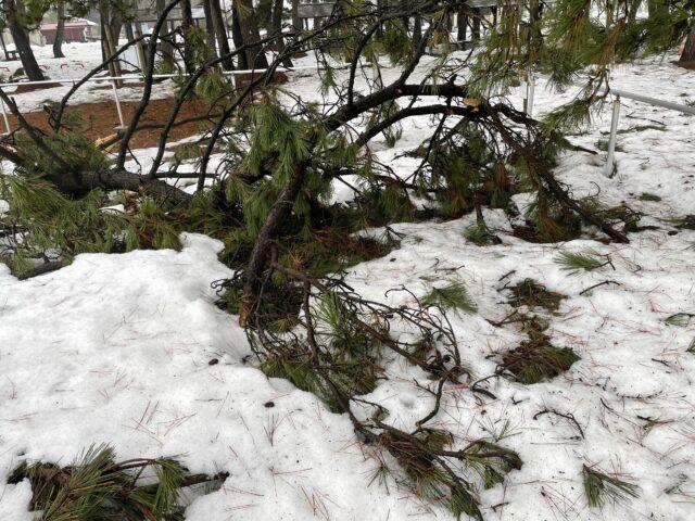 初の雪中ソロキャンプ (12)