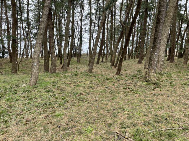 グリーンパークおおしまキャンプ場 (7)